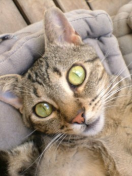 Tiggy's lovely face
