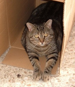 Tiggy as she is now in a box
