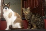Smudge and Tiggy in 2005