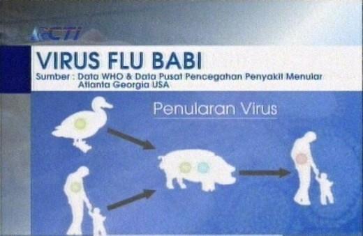 swine flu courtesy RCTI
