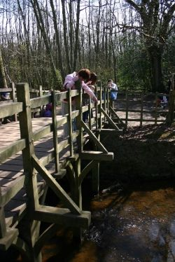 Pooh Sticks Bridge, Ashdown Forest, East Sussex UK. Thought to be the bridge that features in the 'Winnie the Pooh' story.