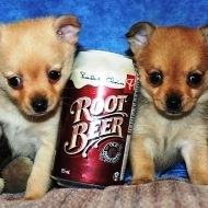 Small as a can of rootbeer
