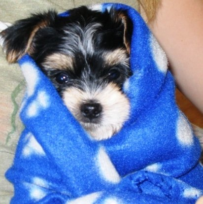 Cuddly pup
