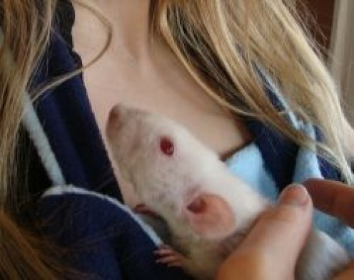 How to Make a Pet Rat Carrier