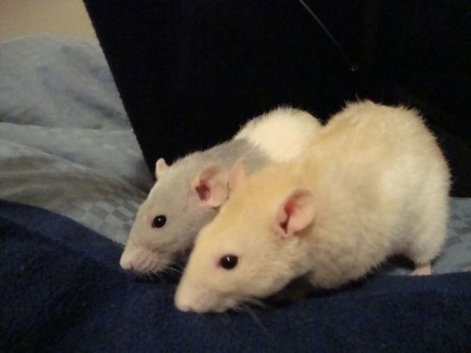 Mo and Nim