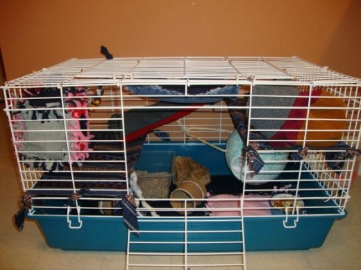 simple and easy ways to accessorize a rat cage pethelpful. Black Bedroom Furniture Sets. Home Design Ideas