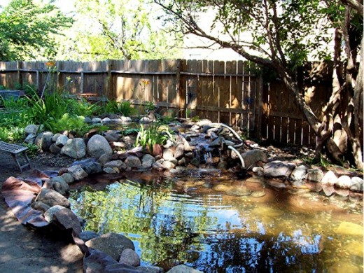 Once the pond is filled it's time to cut the tarp and start the landscaping.