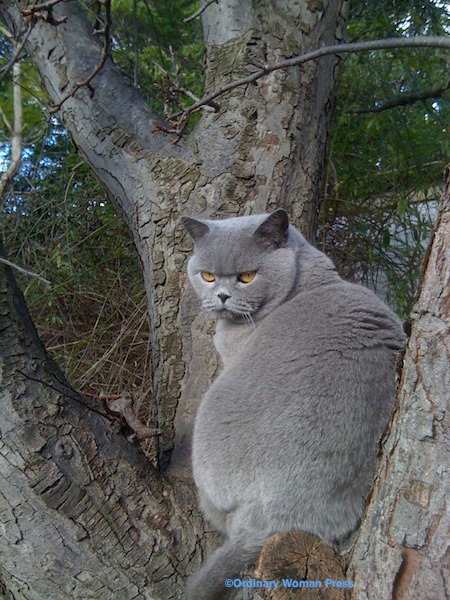 Me and my tree. I share it with possums.