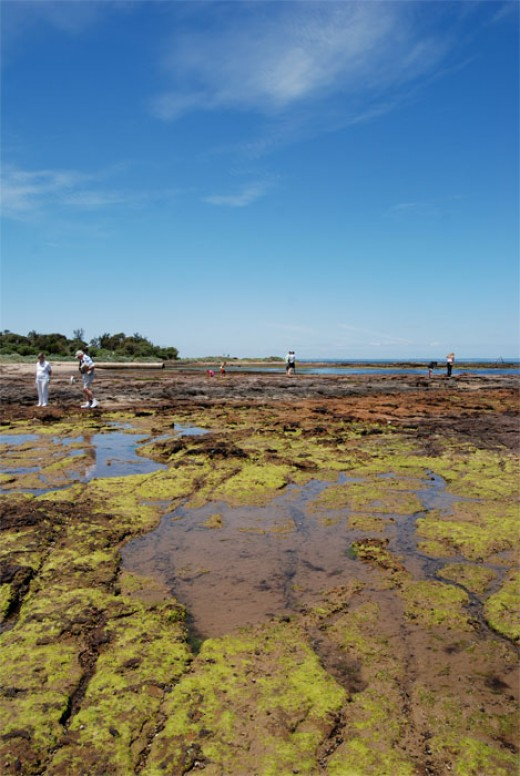 Looking south towards the Mornington Peninsula, the rockpools are full of sea snails and tiny crabs at low tide