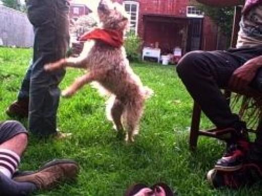 My Dog As a Service Animal