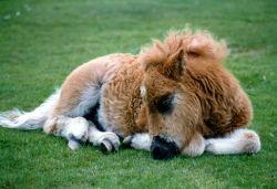 Sleeping foal.