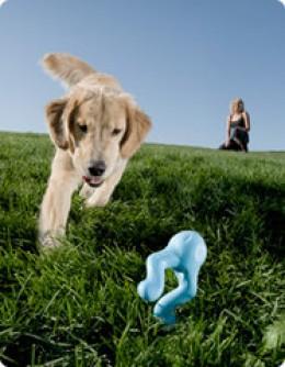 Tizzi dog toy