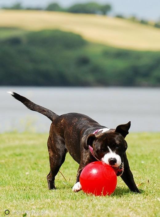 Indestructible Dog Ball