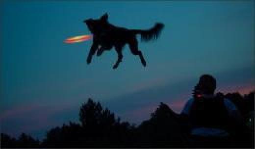glow in the dark dog frisbee