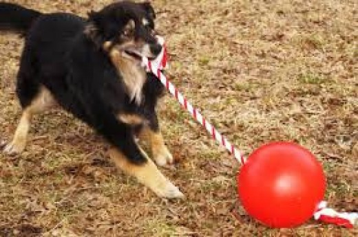 Tuggo Dog Ball