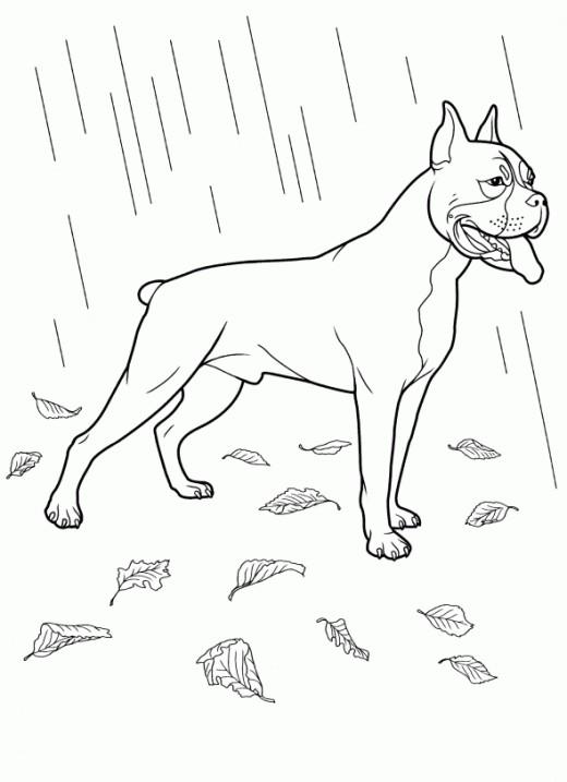 Best dog coloring pages for Boxer puppy coloring pages