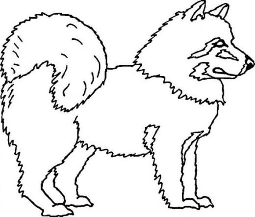 husky dog coloring page