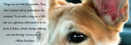 inspiration dog quote