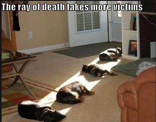 Dog Ray of Death