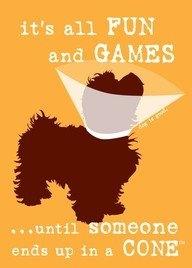 Doggie Cone Head