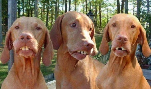 Dogs With Billy Bob Teeth