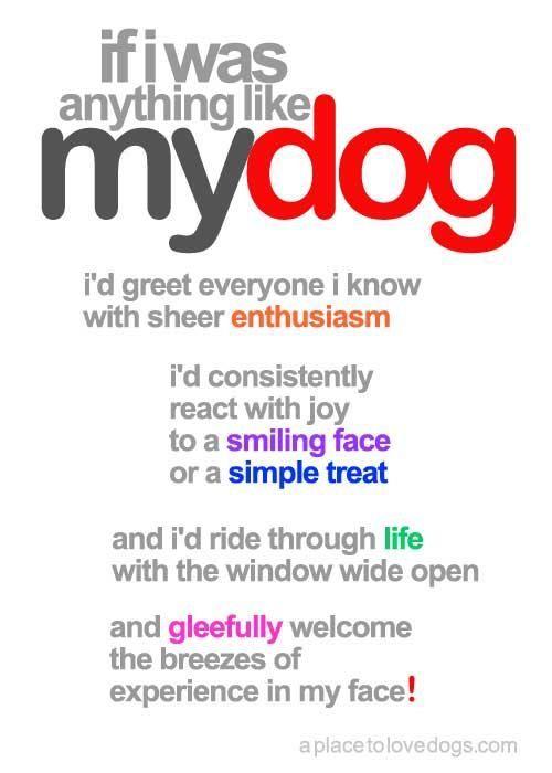 If I Was Anything Like My Dog...