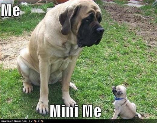 Me and Mini Me Dogs