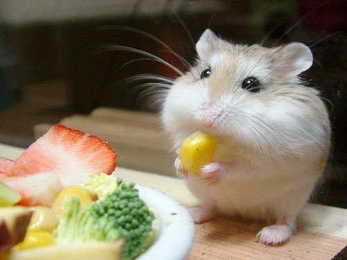 #62 Cute Little Baby Hampsters
