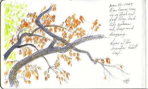 Ink and watercolor sketch of the view from my bed in Kansas by Robert A. Sloan, branches in reddish soggy spring foliage