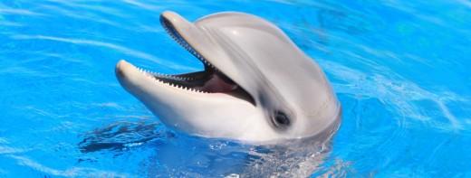 dolphin header