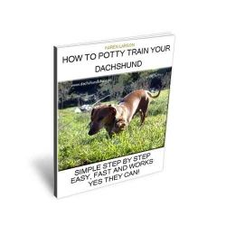 How To Potty Train An Older Dachshund