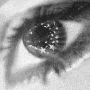 StarryEyes LM profile image