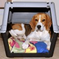Beagle: How To Choose the Right Travel Crate