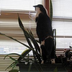 Alien Cat Spy