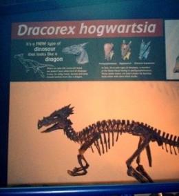 A cross between a dinosaur and a dragon?