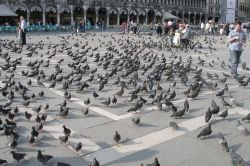 San Marco Pigeons, by Argenberg