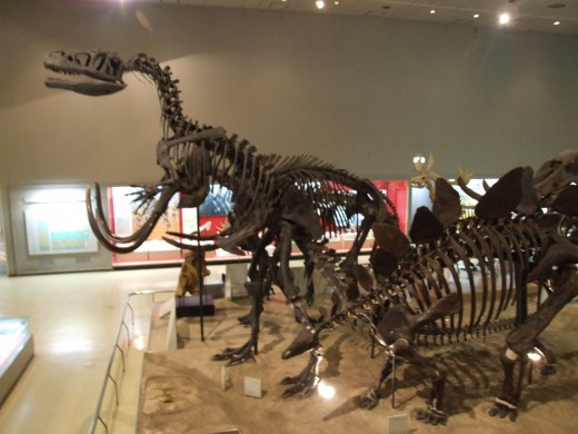 Osaka Natural History Museum
