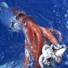 AmbitiousSquid profile image