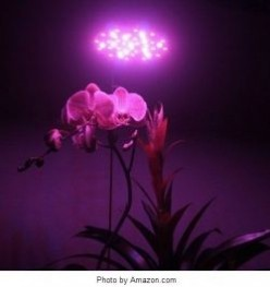Best Led Grow Lights Review - What You Need to Know