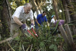 The LDS Members of the Cocoa Florida Stake donned gloves and leaned into some hedge clipping while clearing land at a shelter for homeless women and children.