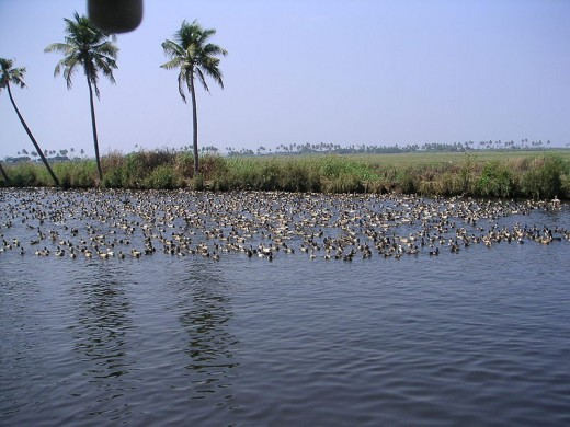 Birding at Backwater
