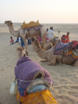 Camel Ride in Sam desert Jaisalmer