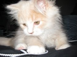 Oliver as a Kitten