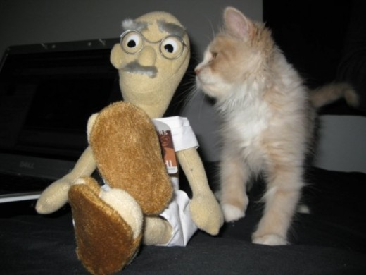 More of Oliver as a kitten, hanging out with his best friend, Gandhi!