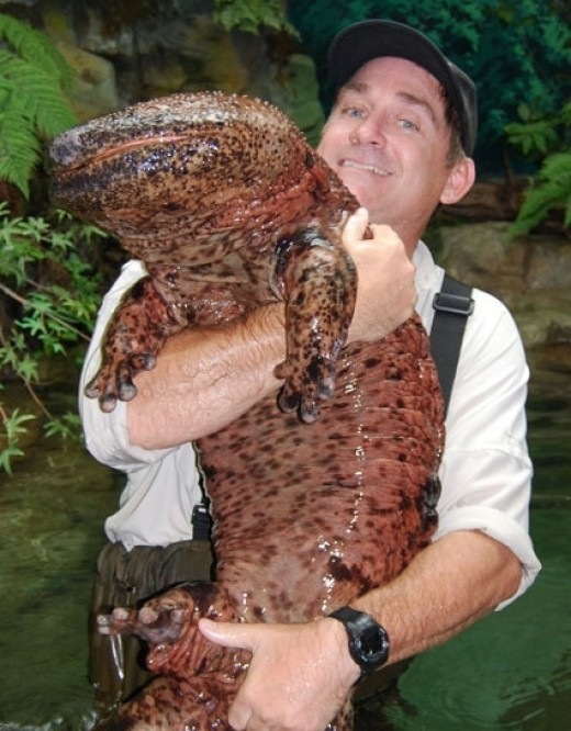 Dr. Brady Barr with a Giant Salamander!