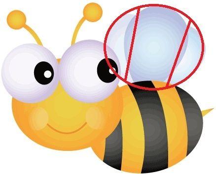 bee wings diagram