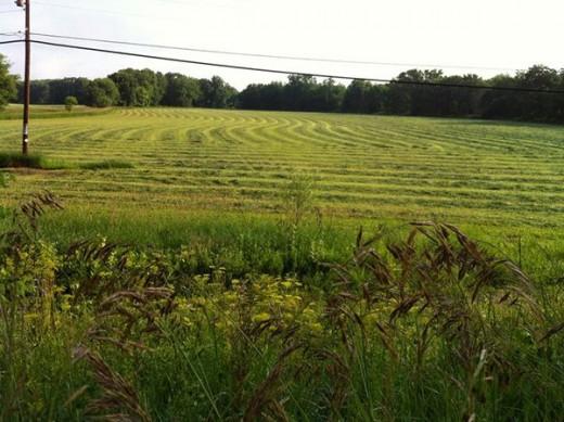 A farm in New Paltz.