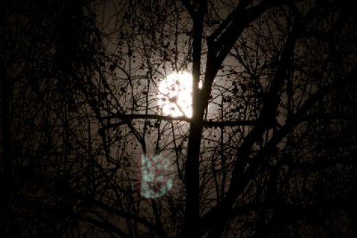Full Moon through trees.