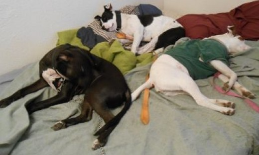 Left to Right: Zen, Bushi and Karma. (Squeaky and Raz weren't in the mood to join the pic.}