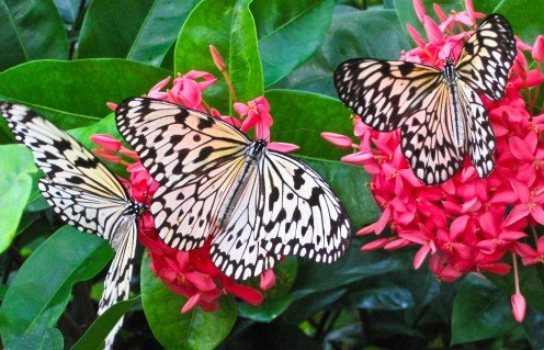 Photo taken at The Butterfly House near St. Louis Missouri